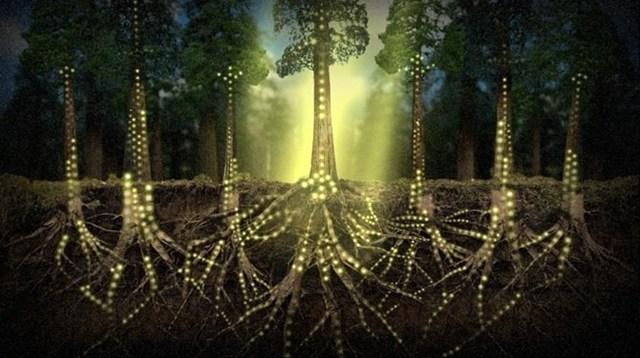 Lebendiger Rhythmus der Natur: Forscher entdeckt Herzschlag der Bäume